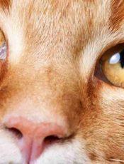 Jó tudni merre van az állatorvosi rendelő