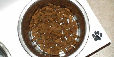 Egyre nő a hipoallergén kutyatáp felhozatal