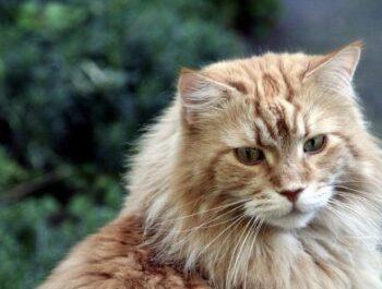 Mi történik egy macskás videóban?